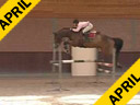 Available on DVD No.14<br>Piet Raijmakers<br>Assisting<br> Keiji Honda<br>La Caletto<br>Holsteiner<br>by: Caletto<br>10 yrs. old Dutch Gelding<br>Training: Grand Prix<br>Duration: 35 minutes