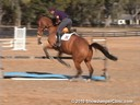 Aaron Vale<br> Riding & Lecturing<br> Droxello<br> 10 yrs. old<br> Oldenburg<br> Training: Grand Prix Level<br> Duration: 7 minutes