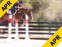 Aaron Vale Riding & Lecturing Valentine 5 yrs. old Mare Hanoverian/ Voltaire Training: 3.6 ft Level Duration: 20 minutes