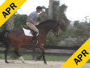 Available on DVD No.1<br>Geoff Teal<br>Riding & Lecturing<br>Artistic<br>Owned by:<br> Lucy Mitchell-Innes<br>German Warmblood Gelding<br>14 yrs. old<br>Training: Adult Hunter<br>Duration: 28 minutes