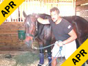 Sal Salvetti<br> Massage Therapy<br> For Jumpers<br> Westfalen<br> 12 yrs. old Mare<br> Training: PSG<br> Duration:35 minutes