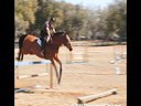 Aaron Vale<br> Riding & Lecturing<br> Serval<br> 12 yrs. old <br> Belgium<br> Training: Grand Prix 1.50 meters<br> Duration: 13 minutes
